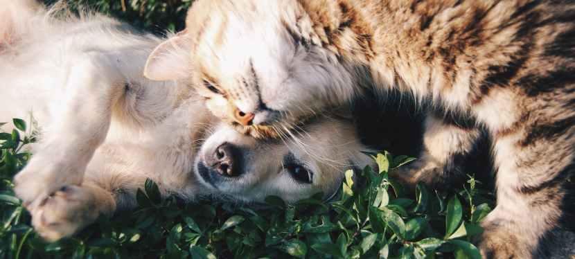 Style de vie   Ce qu'il faut savoir avant d'adopter un chien ou unchat